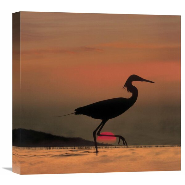Nature Photographs Little Egret Silhouetted at Sunset, Africa by Tim Fitzharris Photographic Print on Wrapped Canvas by Global Gallery