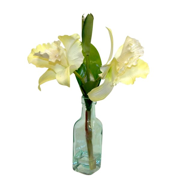 Cattleya Orchid Floral Arrangement in Decorative Vase by August Grove