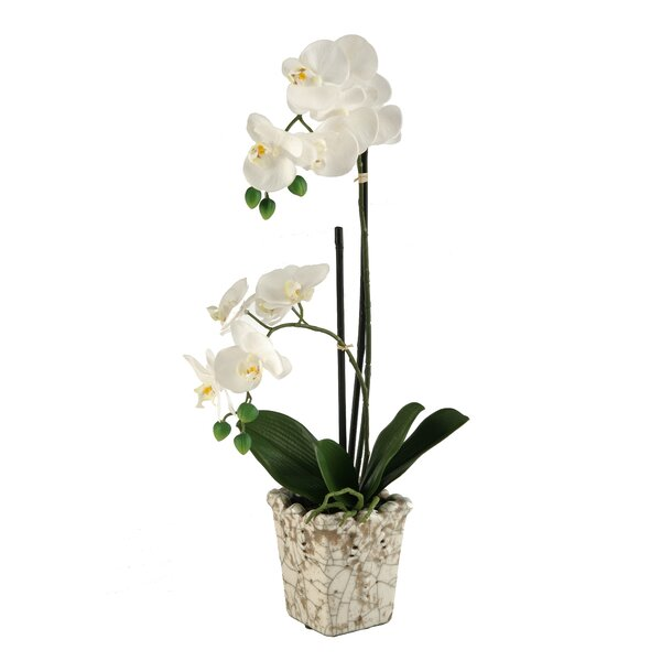 White Orchids in Crackle Ceramic Planter by D & W Silks