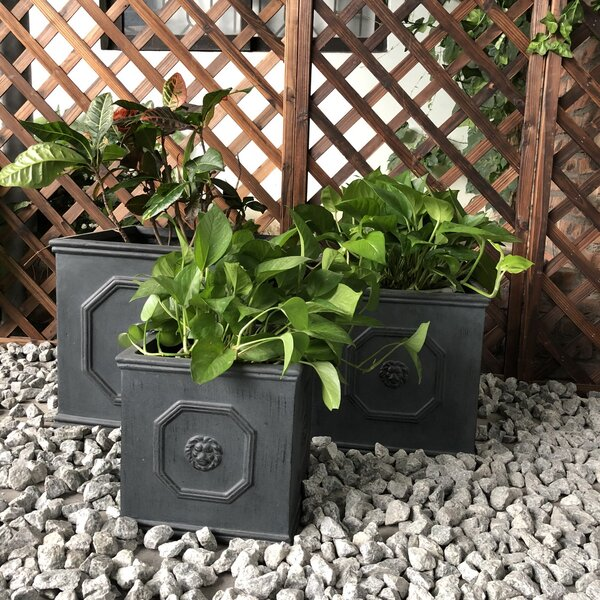 Northwich Lion Head Square 3-Piece Planter Box Set by Charlton Home