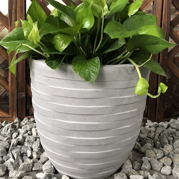 Colchester Rough Surface Round Pot Planter by Ebern Designs