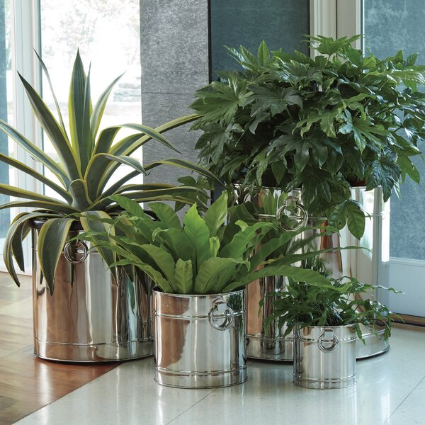 Lodhi Stainless Steel Pot Planter by Global Views