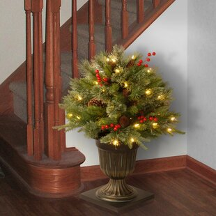 porch bush foliage topiary in decorative urn - Christmas Topiary