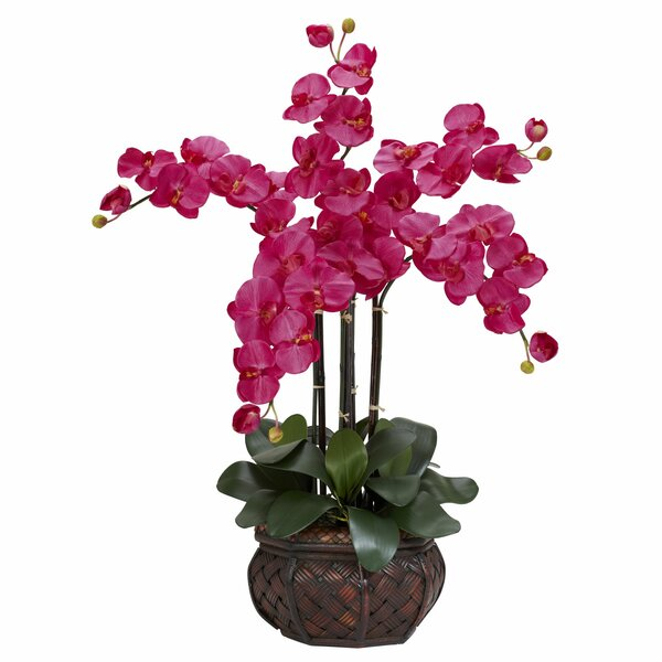 Phalaenopsis with Decorative Vase Silk Flower Arrangement in Beauty by Nearly Natural