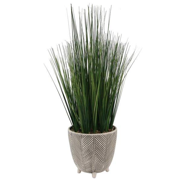 22 Onion Grass Pattern Desktop Succulent Plant in Ceramic Pot by Bungalow Rose