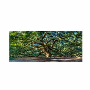 'Angel Oak Charleston' by Pierre Leclerc Framed Photographic Print on Wrapped Canvas by Trademark Fine Art