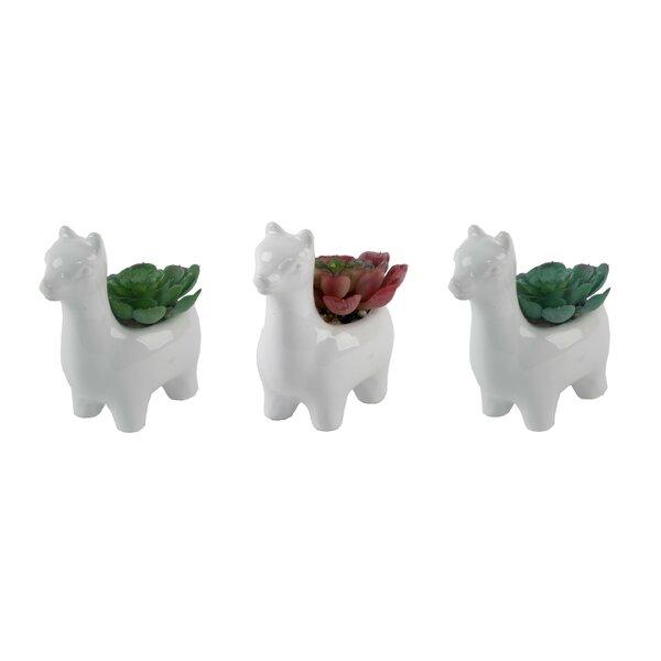 3 Piece Llama Gift Desktop Succulent Plant Set by Wrought Studio