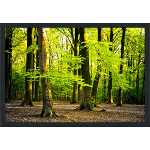 Bright Summer Forest I Framed Photographic Print by Picture Perfect International
