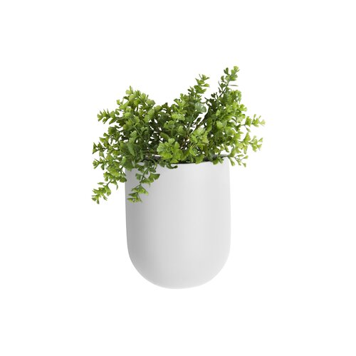 Coulter Oval Ceramic Wall Planter Freeport Park Colour: White