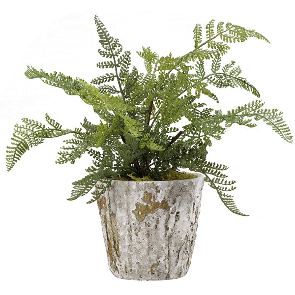 Lace Fern Rustic Terra Cotta Floor Foliage Plant in Pot by Bloomsbury Market