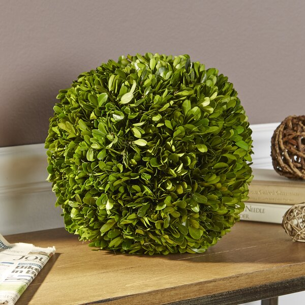 Preserved Boxwood Ball Decor by Birch Lane™