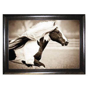 Wild Horse Framed Photographic Print by Pictures and Mirrors