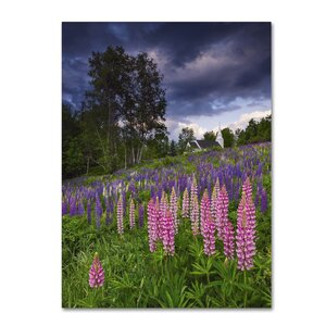'Lupines on the Hill' by Michael Blanchette Photographic Print on Wrapped Canvas by Trademark Fine Art