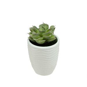 Decorative Desktop Echeveria Succulent Plant in Pot