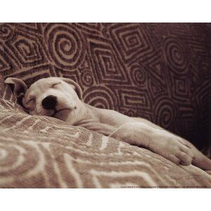 Dog Tired by Jim Dratfield Photographic Print by Evive Designs