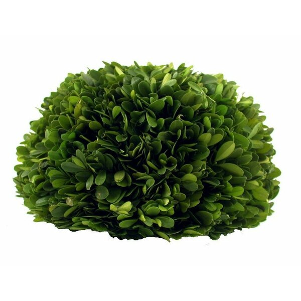 Preserved Boxwood Half Ball by Flora Decor