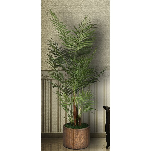 Palm Tree Plant by Wildon Home ®
