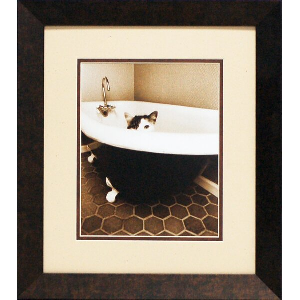 Kitty III by Dratfield, Jim Framed Photographic Print by Artistic Reflections