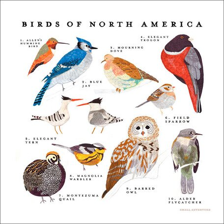Birds of North America Canvas Art by Oopsy Daisy