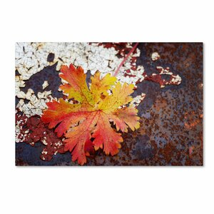 'Autumn Rust' by Philippe Sainte-Laudy Photographic Print on Canvas by Trademark Fine Art