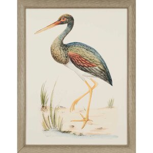 Water Bird II by Meyer Framed Painting Print by Paragon