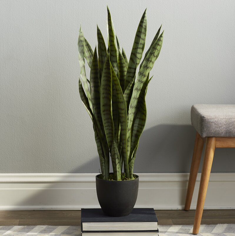 Beachcrest Home Sycamore Faux Sansevieria Floor Plant in Pot ...