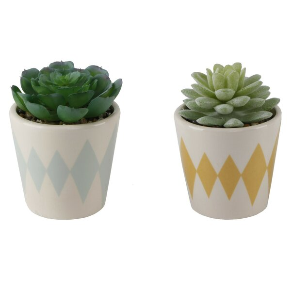 2 Piece Diamond Print Desktop Succulent Plant in Ceramic Pot Set by World Menagerie