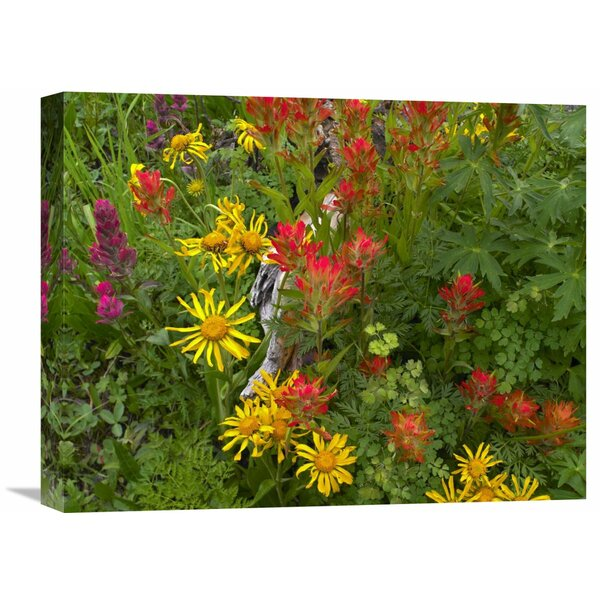 Nature Photographs Orange Sneezeweed and Indian Paintbrush Flowers in Meadow, North America Photographic Print on Wrapped Canvas by Global Gallery
