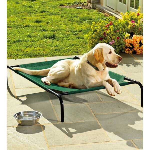 Weather Resistant Raised Mesh Cot by Plow & Hearth