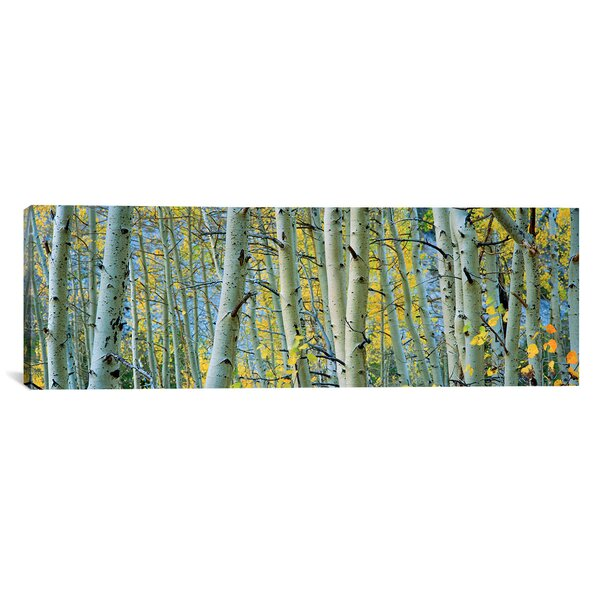 Panoramic Aspen Trees in a Forest, Rock Creek Lake, California, USA Photographic Print on Canvas by iCanvas