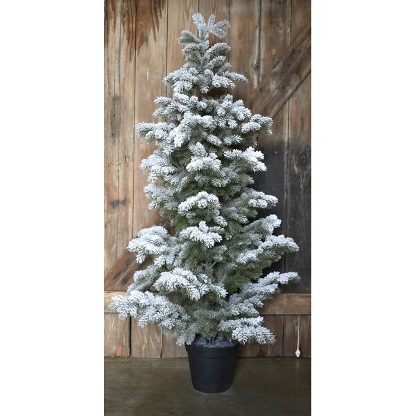 Snow Flocked Pine LG 56 Green Christmas Tree by Darby Home Co