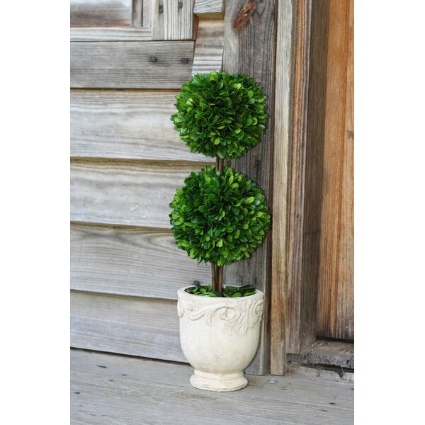 Preserved Boxwood Double Ball Topiary in Pot by Flora Decor
