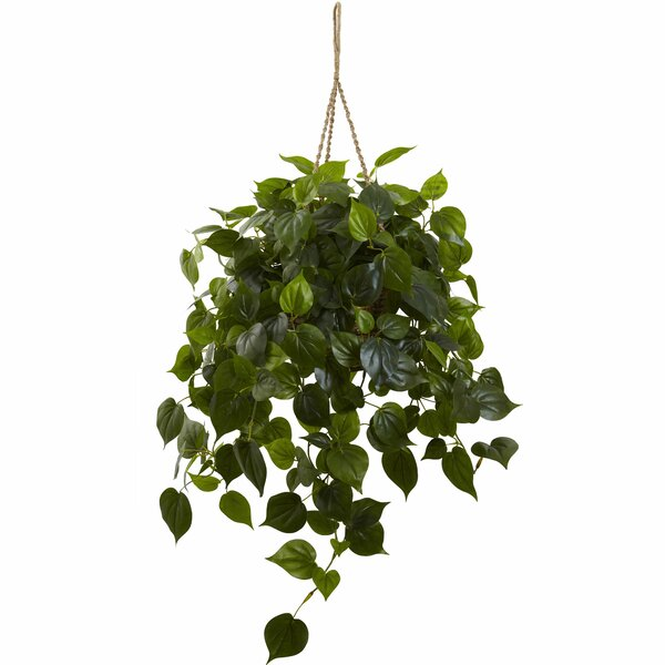 Philodendron Hanging Plant in Basket by Nearly Natural