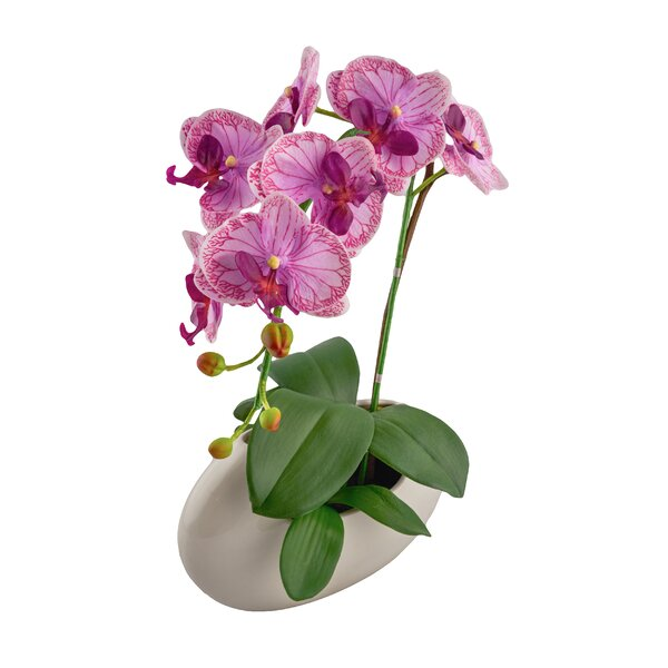 Phalaenopsis Floral Arrangement by Red Vanilla