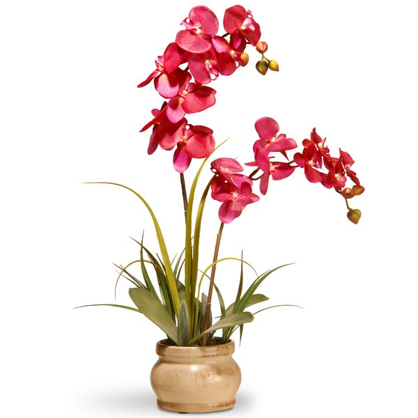 Spring Orchid Flowers in Pot by National Tree Co.