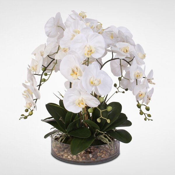Phalaenopsis Orchid and Vanilla Grass Bush Floral Arrangement by Greyleigh