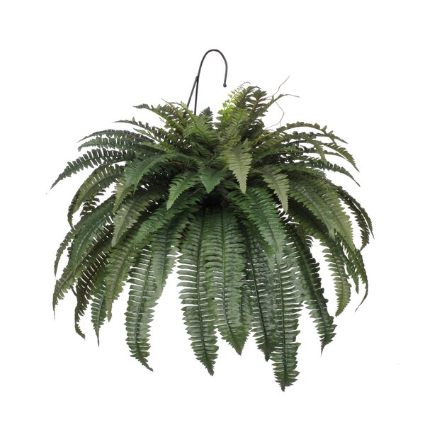 Artificial Fern Hanging Plant in Basket by Ivy Bronx