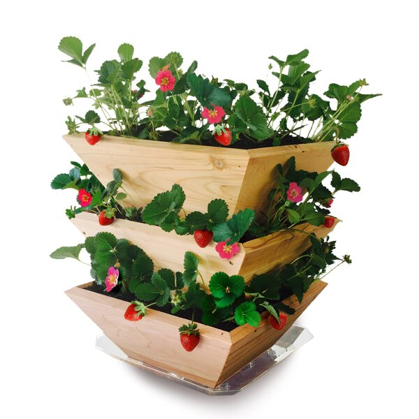 Homegrown Gourmet Garden Strawberry Patch Tower Wood Vertical Garden Planter by Architec