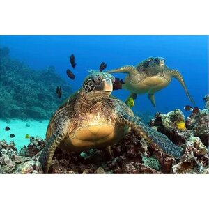 'Two Green Sea Turtle' Photographic Print on Canvas by Latitude Run