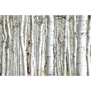 'Birch Wood' Photographic Print on Canvas by East Urban Home