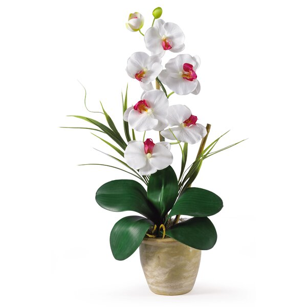 Phalaenopsis Silk Orchid Flowers by Nearly Natural