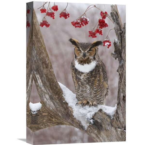 Nature Photographs Great Horned Owl by Global Gallery