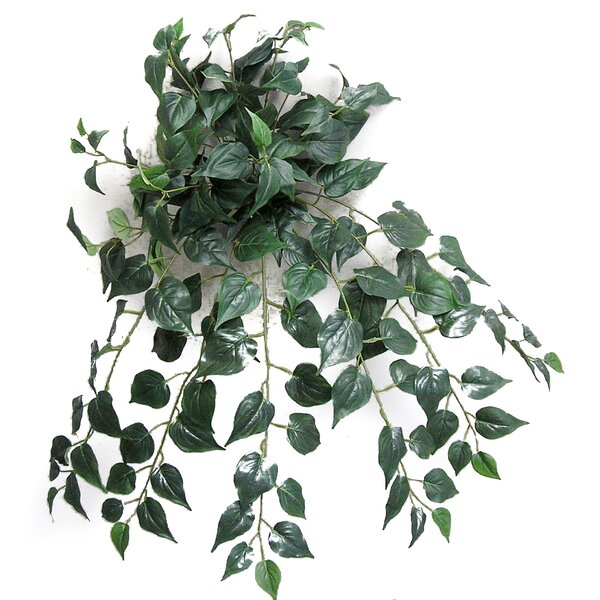 Ivy Hanging Plant by Admired by Nature