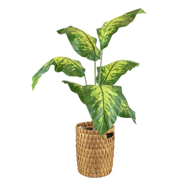 Floor Palm Plant in Basket by Bay Isle Home