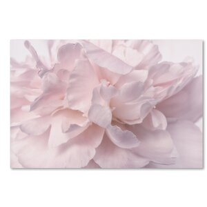Pink Peony Petals II by Cora Niele Photographic Print on Wrapped Canvas by Trademark Fine Art