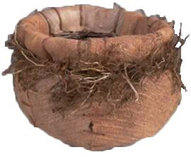 Butera Cocotistis/Wild Roots Pot Planter by August Grove