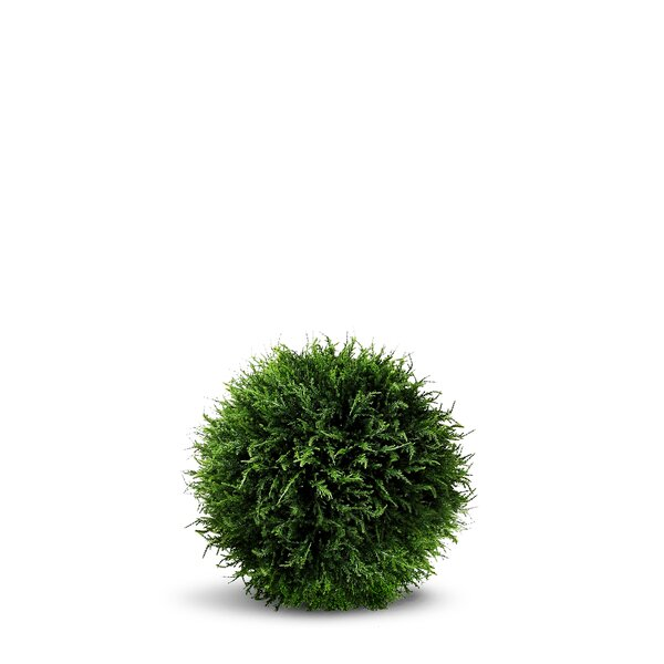 Artificial Cedar Ball Round Topiary by Darby Home Co