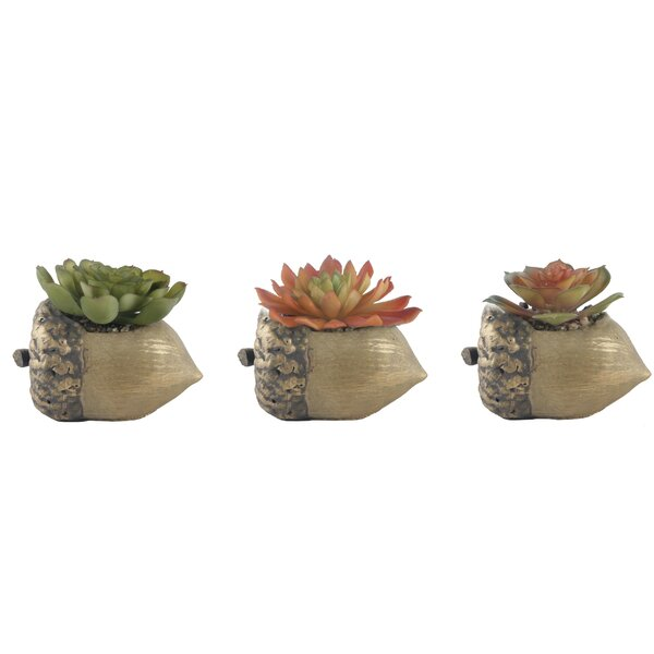3 Piece Acorn Succulent Plant in Pot Set by Millwood Pines
