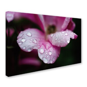 Raindrops on Wild Rose Color Photographic Print on Wrapped Canvas by Trademark Fine Art