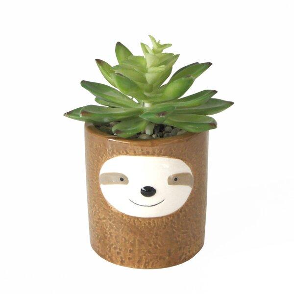 Sloth Desktop Succulent Plant in Ceramic Pot by Ebern Designs